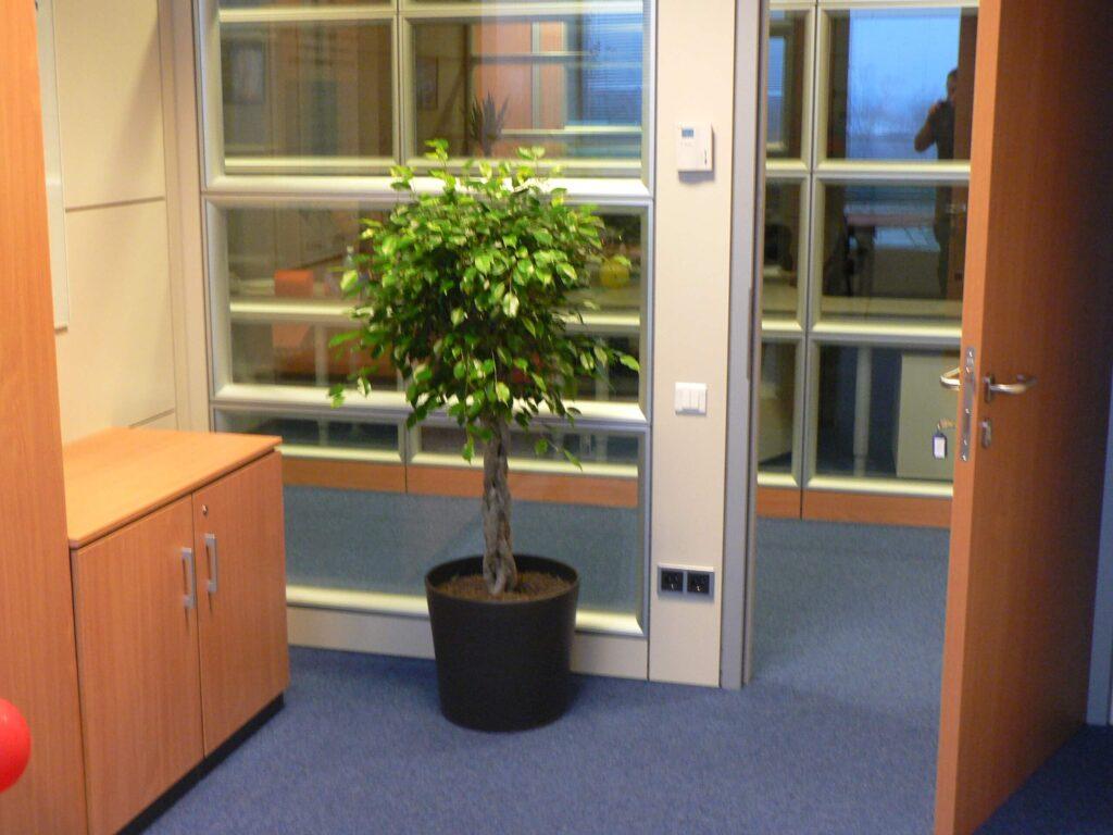 plante-interior-avellana-garden