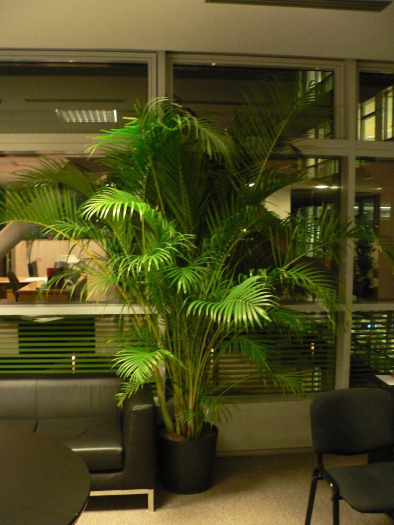 plante-interior-bucuresti