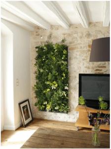 plante birou